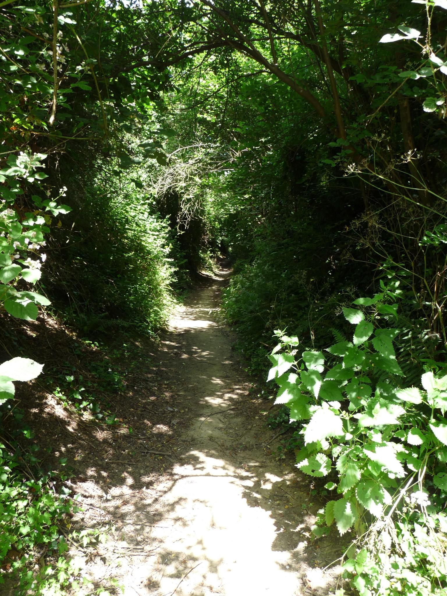 East Coker -Path