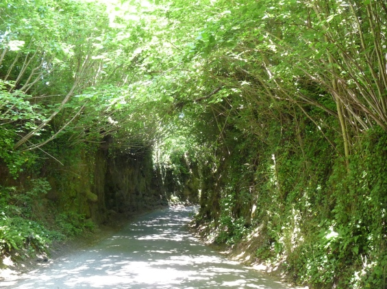One of the many sunken lanes around East Coker