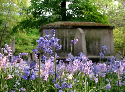 Bluebells, Bunhill Fields